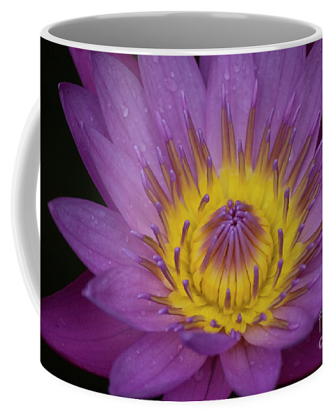 Pink Coffee Mug featuring the photograph Pink Water Lily by Diego Re