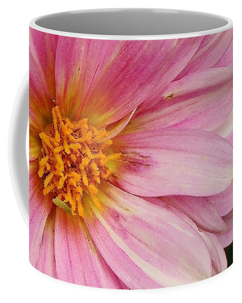 Flora Coffee Mug featuring the photograph Pinks The One by Bruce Bley