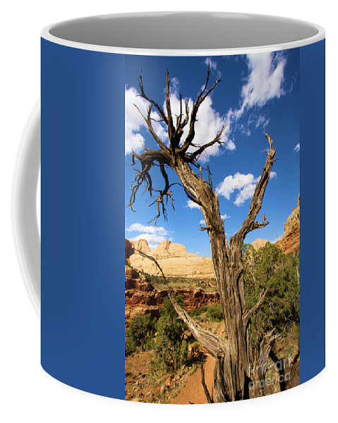 Pinwheel Coffee Mug featuring the photograph Pinwheel Tree by Adam Jewell