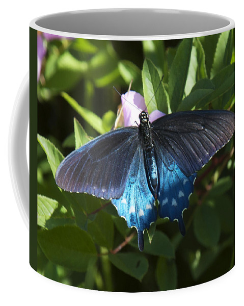 Nature Coffee Mug featuring the photograph Pipevine Swallowtail Din003 by Gerry Gantt
