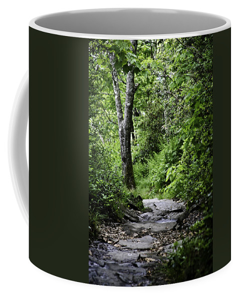 Mount Pisgah Paths Coffee Mug featuring the photograph Pisgah Path by Rob Travis