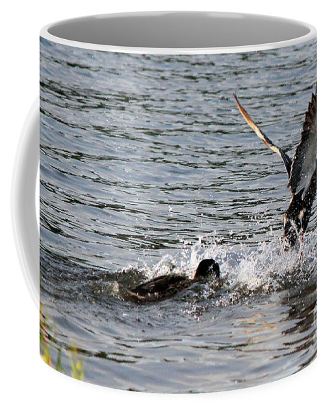 Ducks Coffee Mug featuring the photograph Playing Chase by Kathy White