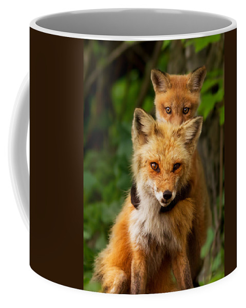 Fox Coffee Mug featuring the photograph Playtime by Mircea Costina Photography