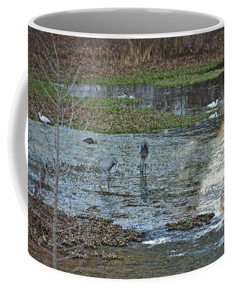 Birds Coffee Mug featuring the photograph Pond Birds At Sunset by Carol Bradley