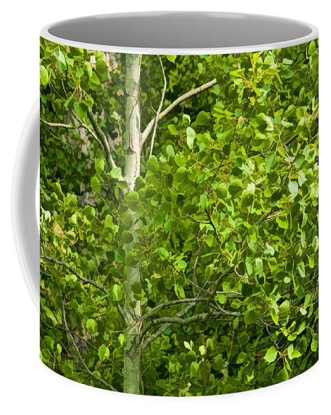 Art Coffee Mug featuring the photograph Poplar Tree And Leaves No.368 by Randall Nyhof