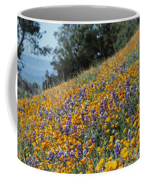 North America Coffee Mug featuring the photograph Poppies And Lupine Flowers Blanket by Marc Moritsch