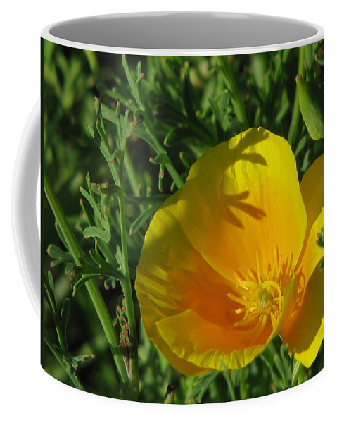Sviatoslav Coffee Mug featuring the photograph Poppy 01 by Sviatoslav Alexakhin
