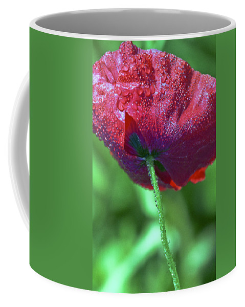 Flower Coffee Mug featuring the photograph Poppy And Dewdrops by Patrick Kessler