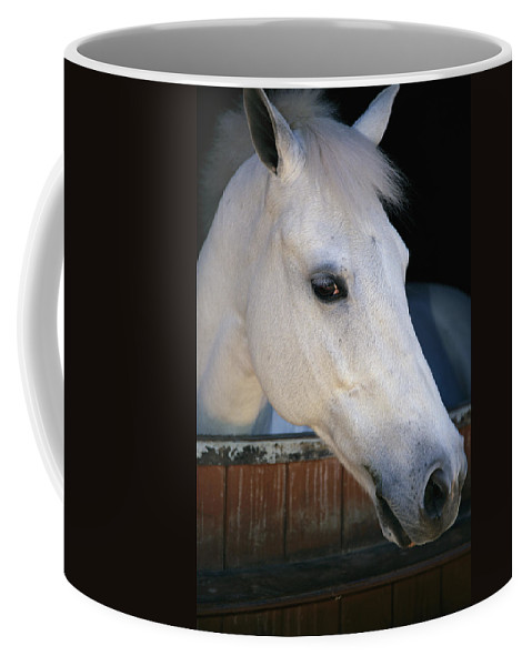 Outdoors Coffee Mug featuring the photograph Portrait Of A White Horse Looking by Stacy Gold