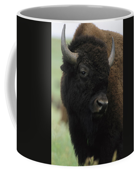 Animals Coffee Mug featuring the photograph Portrait Of An American Bison by Annie Griffiths