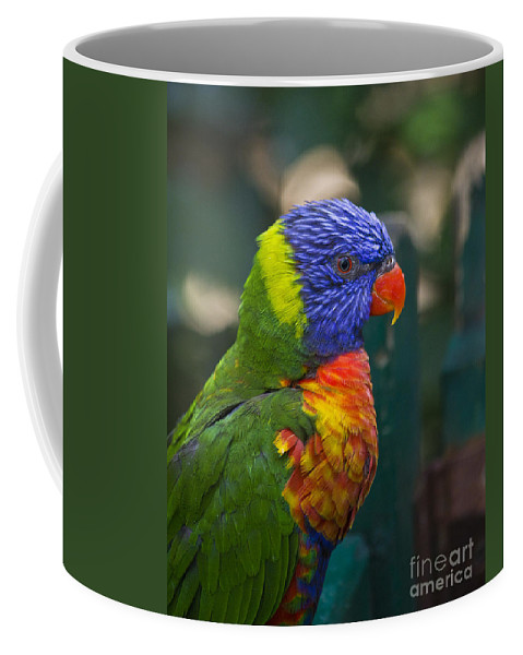 Clare Bambers Coffee Mug featuring the photograph Posing Rainbow Lorikeet. by Clare Bambers