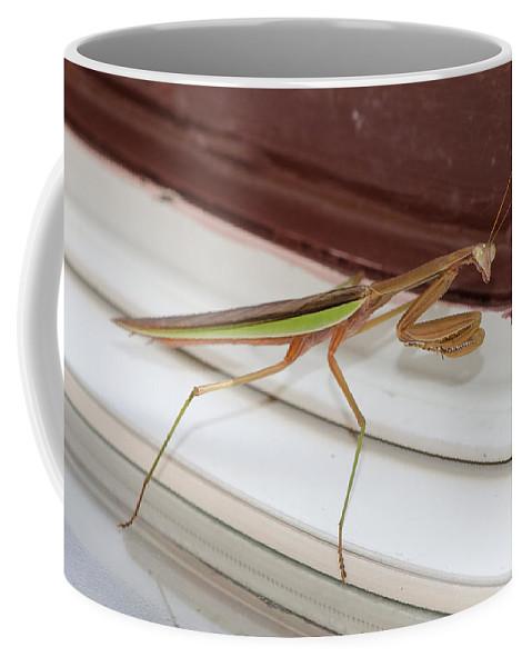 Bug Coffee Mug featuring the photograph Praying Mantis by Shirley Tinkham