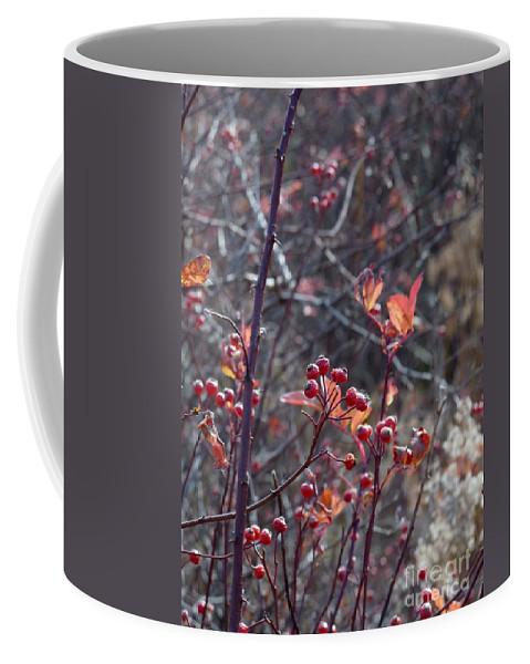 Digital Coffee Mug featuring the digital art Presque Isle Fall 2009 by Kathryn Strick