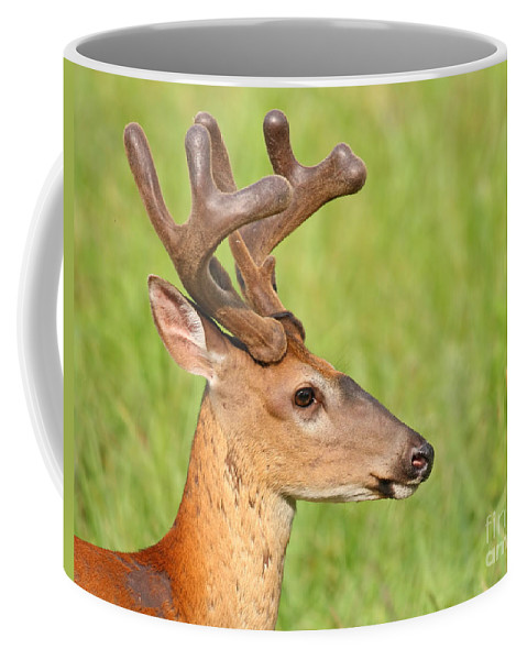 Whitetail Coffee Mug featuring the photograph Pretty In Velvet by David Cutts