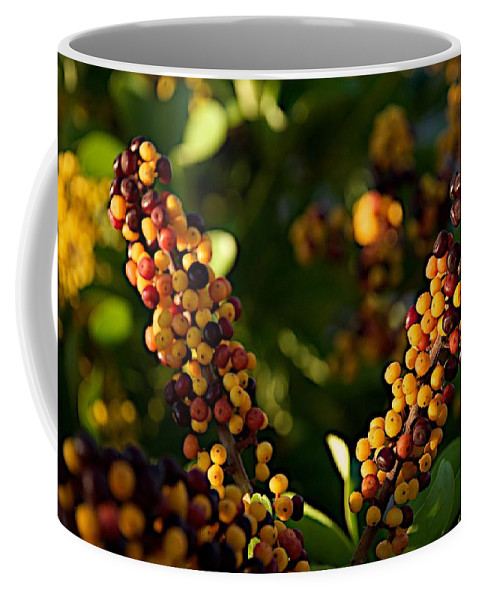 Ave Maria Coffee Mug featuring the photograph Private by Joseph Yarbrough