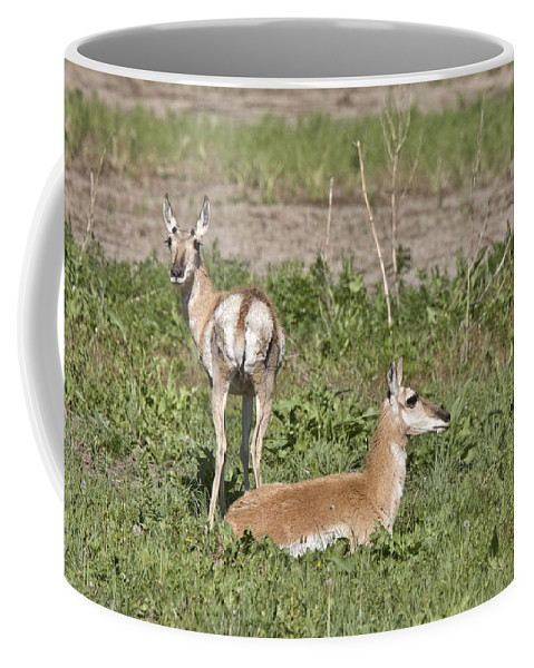 Pronghorn Coffee Mug featuring the photograph Pronghorn Antelope With Young by Mark Duffy