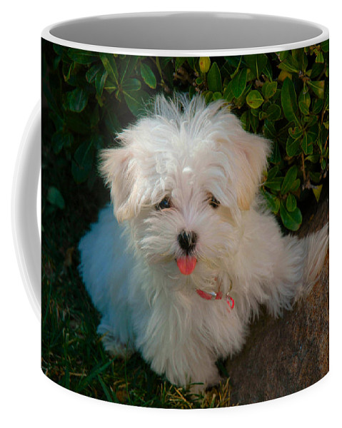 Dogs Coffee Mug featuring the photograph Pure Cuteness by Lynn Bauer
