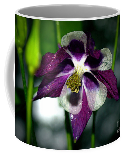 Flower Coffee Mug featuring the photograph Purple And White by Kevin Fortier