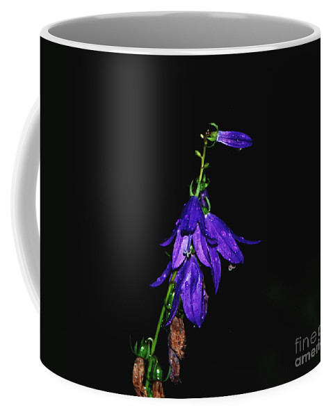 Purple Coffee Mug featuring the photograph Purple Beauty by Grace Grogan