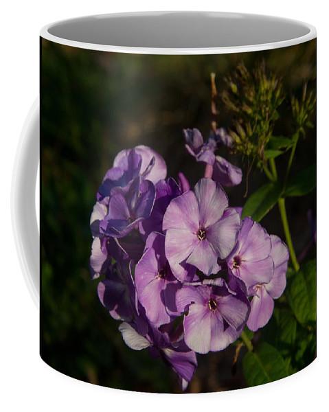 Purple Coffee Mug featuring the photograph Purple Cluster Of Flowers by Douglas Barnett