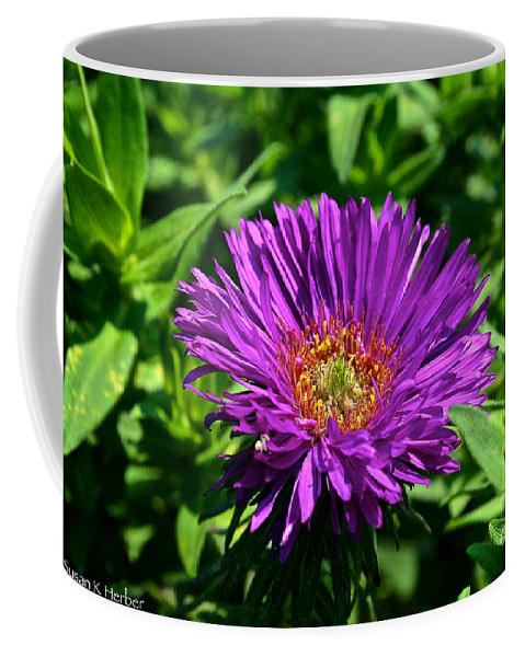 Outdoors Coffee Mug featuring the photograph Purple Dome New England Aster by Susan Herber