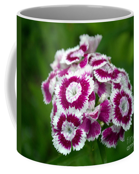 Wild Flower Coffee Mug featuring the photograph Purple On White Flowers by Kevin Fortier