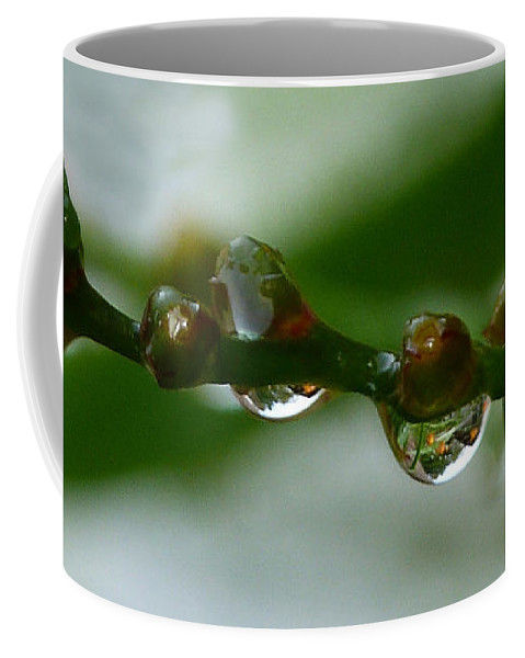 Raindrops Coffee Mug featuring the photograph Rain Drops by Lynn Bolt