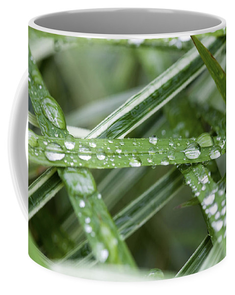 Water Drops Coffee Mug featuring the photograph Rain Drops On Grasses by Rich Franco