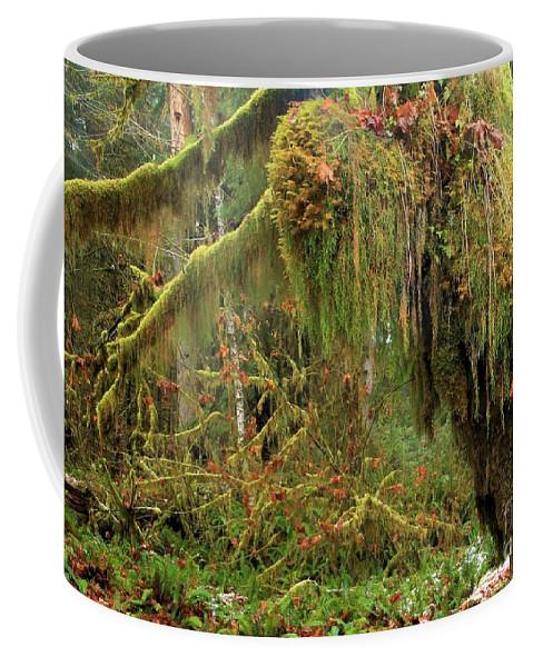 Hoh Rainforest Coffee Mug featuring the photograph Rain Forest Crocodile by Adam Jewell