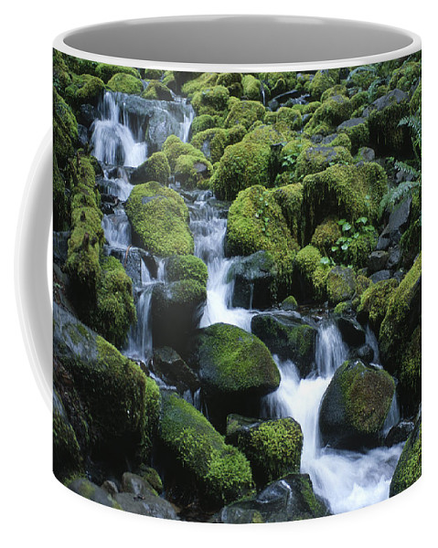 Rainforest Coffee Mug featuring the photograph Rain Forest Stream by Sandra Bronstein