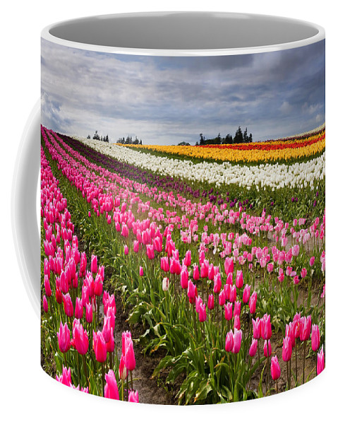 Tulips Coffee Mug featuring the photograph Rainbow Fields by Mike Dawson