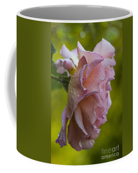 Clare Bambers Coffee Mug featuring the photograph Raindrops. by Clare Bambers