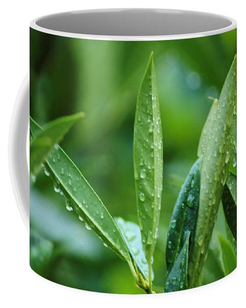 Rain Coffee Mug featuring the photograph Raindrops by Michael Merry