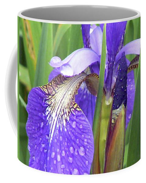 Iris Coffee Mug featuring the photograph Rainy Day Iris by Pamela Patch
