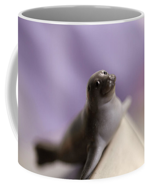 Harp Seal Coffee Mug featuring the photograph Ready For A Dive by Greg Kopriva
