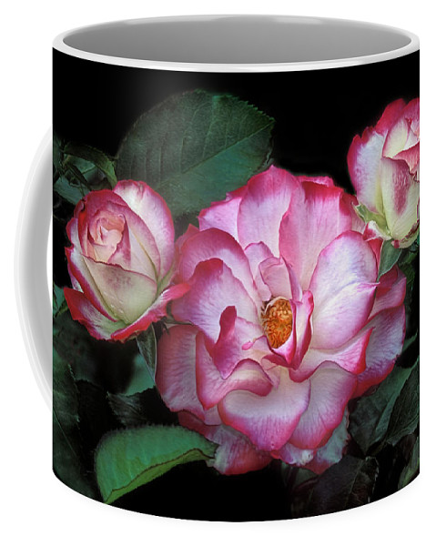 Rose Coffee Mug featuring the photograph Red And White by Dave Mills