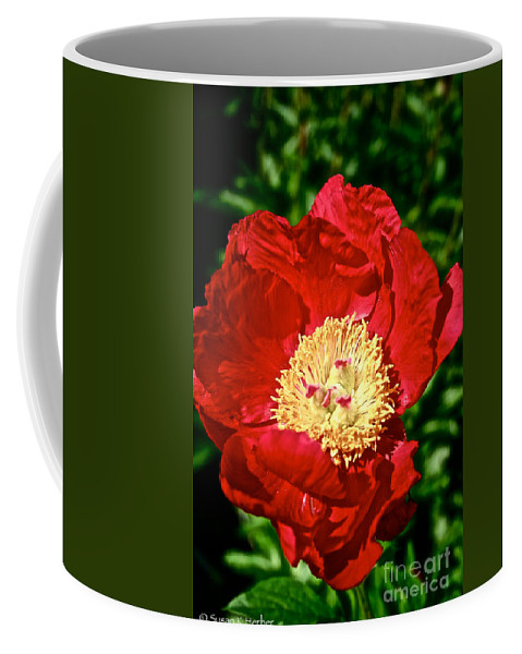 Plant Coffee Mug featuring the photograph Red And Yellow by Susan Herber