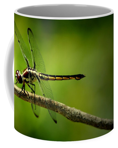Dragonfly Coffee Mug featuring the photograph Red Dragon by David Weeks