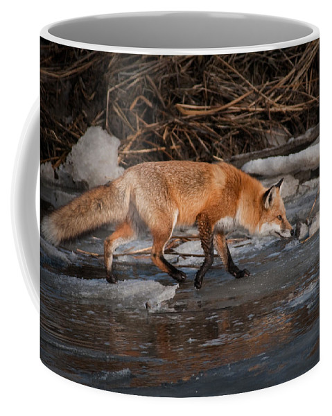 Animals Coffee Mug featuring the photograph Red Fox Crossing by Craig Leaper