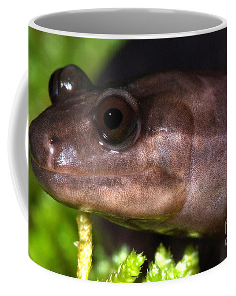 Red Hills Salamander Coffee Mug featuring the photograph Red Hills Salamander by Dant� Fenolio
