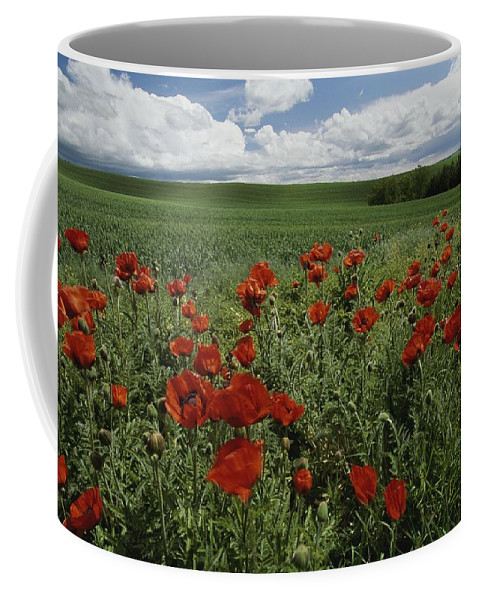 North America Coffee Mug featuring the photograph Red Poppies Edge A Field Near Moscow by Michael Melford
