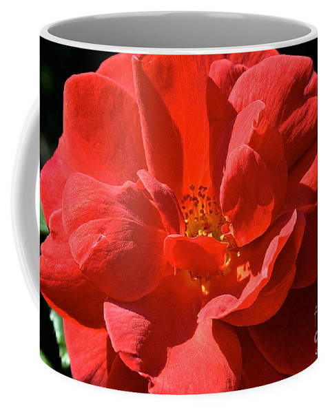 Outdoors Coffee Mug featuring the photograph Red Rose Summer by Susan Herber