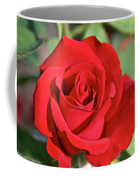 Plant Coffee Mug featuring the photograph Red Rose by Susan Herber