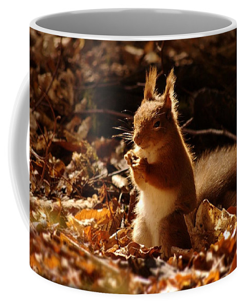 Red Squirrel Coffee Mug featuring the photograph Red Squirrel by Gavin Macrae