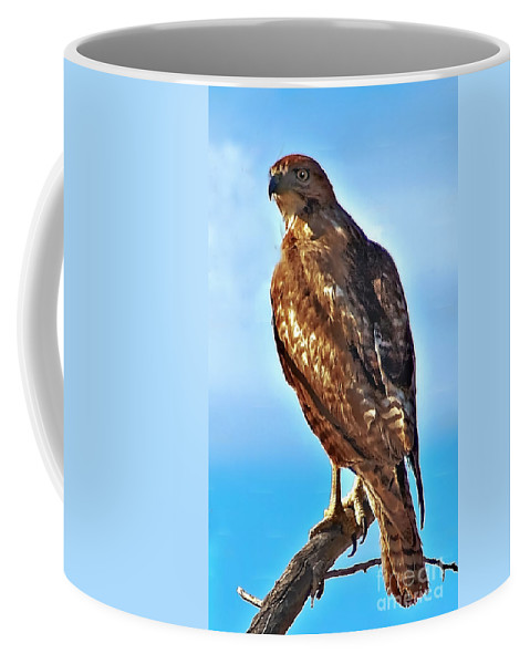 Buteo Jamaicensis Coffee Mug featuring the photograph Red Tail Hawk by Robert Bales