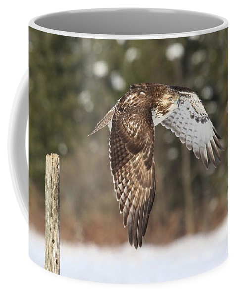 Red-tailed Hawk Coffee Mug featuring the photograph Red Tailed Take-off by Teresa McGill