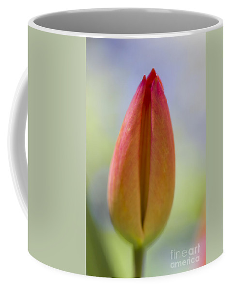 Tulip Coffee Mug featuring the photograph Red Tulip Bud by Heiko Koehrer-Wagner