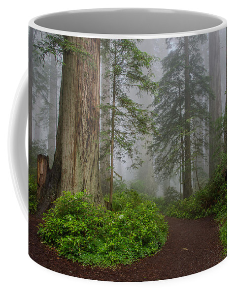 Lady Bird Johnson Grove Coffee Mug featuring the photograph Redwoods Rising In Fog by Greg Nyquist