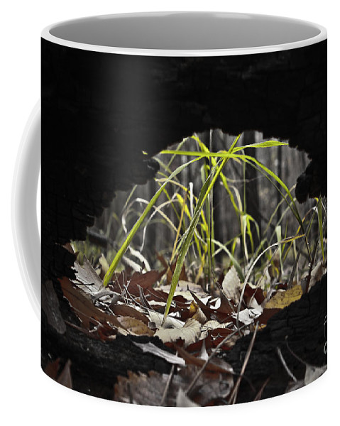 Nature Coffee Mug featuring the photograph Regrowth by Kim Henderson