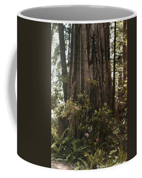 Day Coffee Mug featuring the photograph Rhododendrons Bloom Around The Trunk by Charles Martin